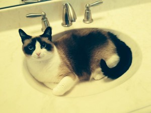 I do my best thinking in the sink.