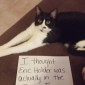 Political Cat Shaming